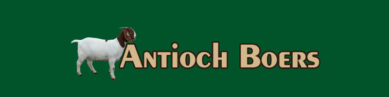 Antioch Boers Header